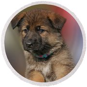 Round Beach Towel featuring the photograph Darling Puppy by Sandy Keeton