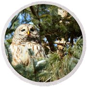 Day Dreamer Round Beach Towel