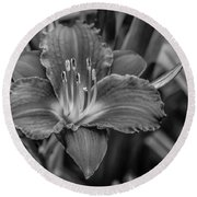 Day Lilly Round Beach Towel by Ray Congrove