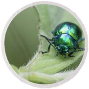 Dead-nettle Leaf Beetle - Chrysolina Fastuosa Round Beach Towel by Jivko Nakev