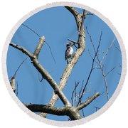 Dead Tree - Wildlife Round Beach Towel by Donald C Morgan