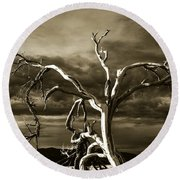 Round Beach Towel featuring the photograph Dead Tree In Death Valley 10 by Micah May