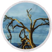 Round Beach Towel featuring the photograph Dead Tree In Death Valley 7 by Micah May