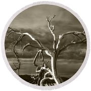 Round Beach Towel featuring the photograph Dead Tree In Death Valley 8 by Micah May