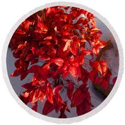 December Burning Bush Round Beach Towel by Anastasia Savage Ealy