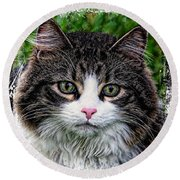 Round Beach Towel featuring the mixed media Decorative Maine Coon Cat A4122016 by Mas Art Studio