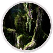 Round Beach Towel featuring the photograph Deep In The Forest by Lori Seaman
