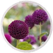 Deep Purple Dahlias Round Beach Towel