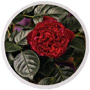 Deep Red Rose Round Beach Towel