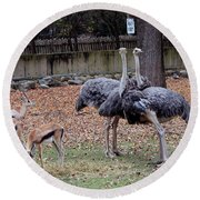 Deer And Ostriches Round Beach Towel