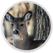 Round Beach Towel featuring the photograph Deer At The Salad Bar by Paul Freidlund
