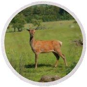 Deer Calf. Round Beach Towel