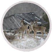 Deer Crossing Ahead Round Beach Towel