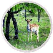 Deer Curiosity Round Beach Towel