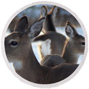 Deer Family Round Beach Towel