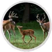 Round Beach Towel featuring the photograph Deer Family Portrait by Andrea Silies