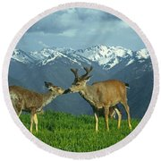 Ma-181-deer In Love  Round Beach Towel