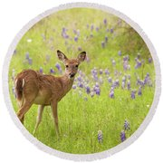 Deer In The Bluebonnets Round Beach Towel