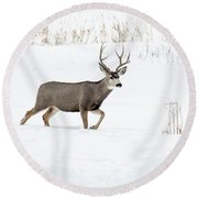 Round Beach Towel featuring the photograph Deer In The Snow by Rebecca Margraf