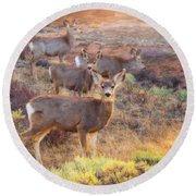 Round Beach Towel featuring the photograph Deer In The Sunlight by Darren White