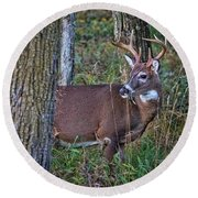 Deer In The Woods Round Beach Towel