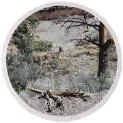 One Deer On A Dry Mountain Round Beach Towel