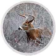 Deer On A Frosty Morning  Round Beach Towel by Nancy Landry