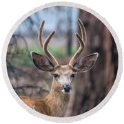 Deer Stare Round Beach Towel