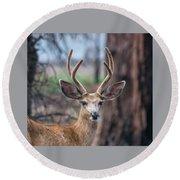 Deer Stare Round Beach Towel