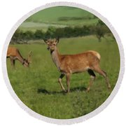 Deers On A Hill Pasture. Round Beach Towel