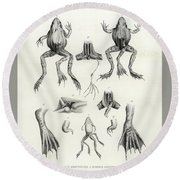 Round Beach Towel featuring the drawing Deformed Frogs - Historic by Joseph Huet