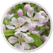 Delicate Soft Pink Apple Blossom Round Beach Towel by Gill Billington
