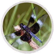 Round Beach Towel featuring the photograph Delicate Wings Of A Dragonfly by Kerri Farley