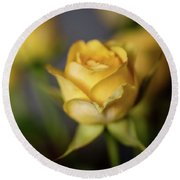 Delicate Yellow Rose  Round Beach Towel by Terry DeLuco