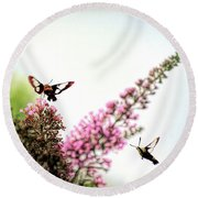 Round Beach Towel featuring the photograph Delight And Joy - Hummingbird Moths In Flight by Kerri Farley