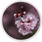 Delightful Pink Prunus Flowers Round Beach Towel