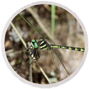Delta-spotted Spiketail  Male Round Beach Towel