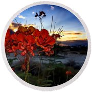 Desert Bird Of Paradise Round Beach Towel by Chris Tarpening