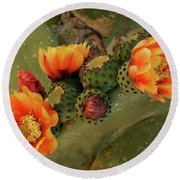 Round Beach Towel featuring the photograph Desert Flame by Lucinda Walter