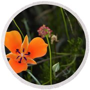 Round Beach Towel featuring the photograph Desert Flower 3 by Penny Lisowski