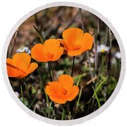 Round Beach Towel featuring the photograph Desert Flowers Four Flowers Four by Penny Lisowski