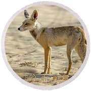 desert Fox 02 Round Beach Towel