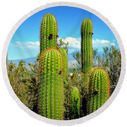 Round Beach Towel featuring the photograph Desert Plants - All In The Family by Glenn McCarthy