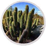 Desert Plants - The Wild Bunch Round Beach Towel