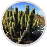 Round Beach Towel featuring the photograph Desert Plants - The Wild Bunch by Glenn McCarthy