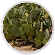 Desert Prickly-pear No6 Round Beach Towel