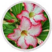 Desert Rose With Buds And Water Round Beach Towel by Larry Nieland