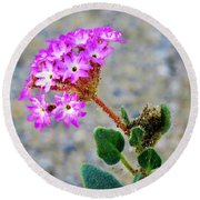 Round Beach Towel featuring the photograph Desert Sand Verbena by Michele Penner