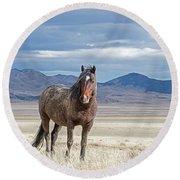 Desert Wild Horse Round Beach Towel