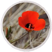 Desert Wildflower Round Beach Towel